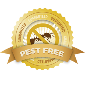 No mess and no fuss, just 100% Pest Removal by Pest Control Wyebank