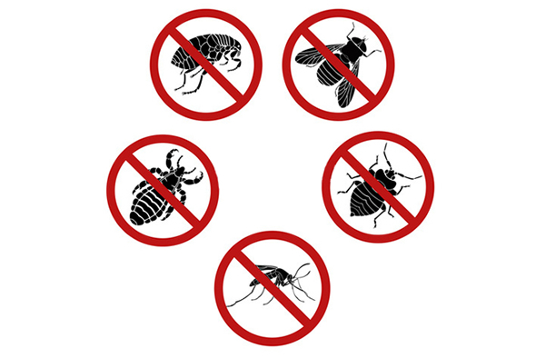 Pest Control Durban offer a diverse range of Pest Extermination services.