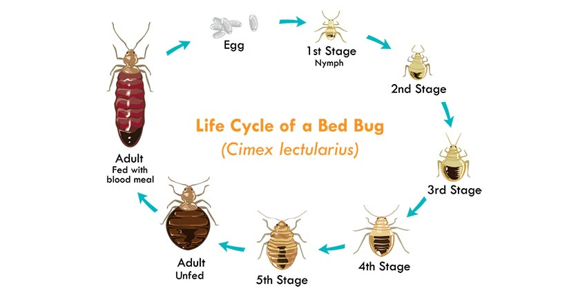Bed Bug Control Durban can deal with any Bed Bug Infestation effortlessly. Pest Worx in Durban you number 1 extermination service in Durban and surrounds.
