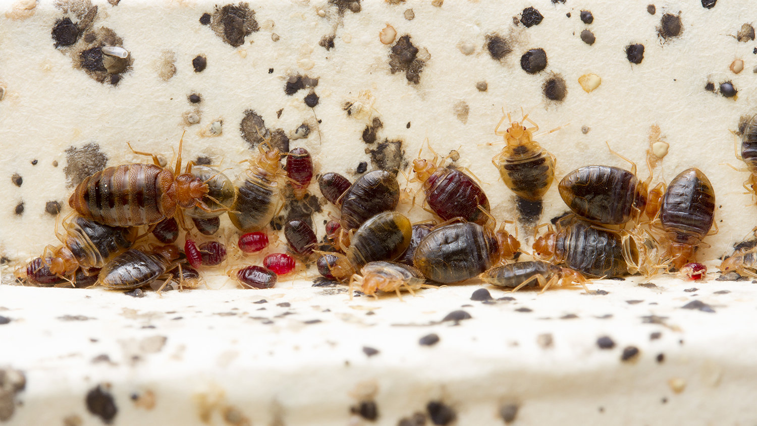 Bed Bug Control Durban experts dont use aerosols like doom. They are generally ineffective and potentially dangerouse