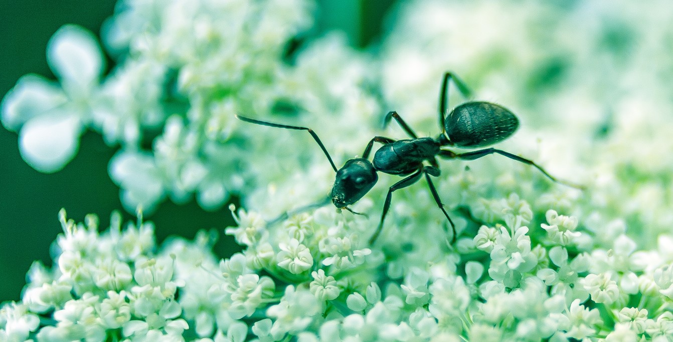 Ant Control Wyebank provide a bespoke and unrivalled Ant Extermination to suite your needs regardless of your situation.