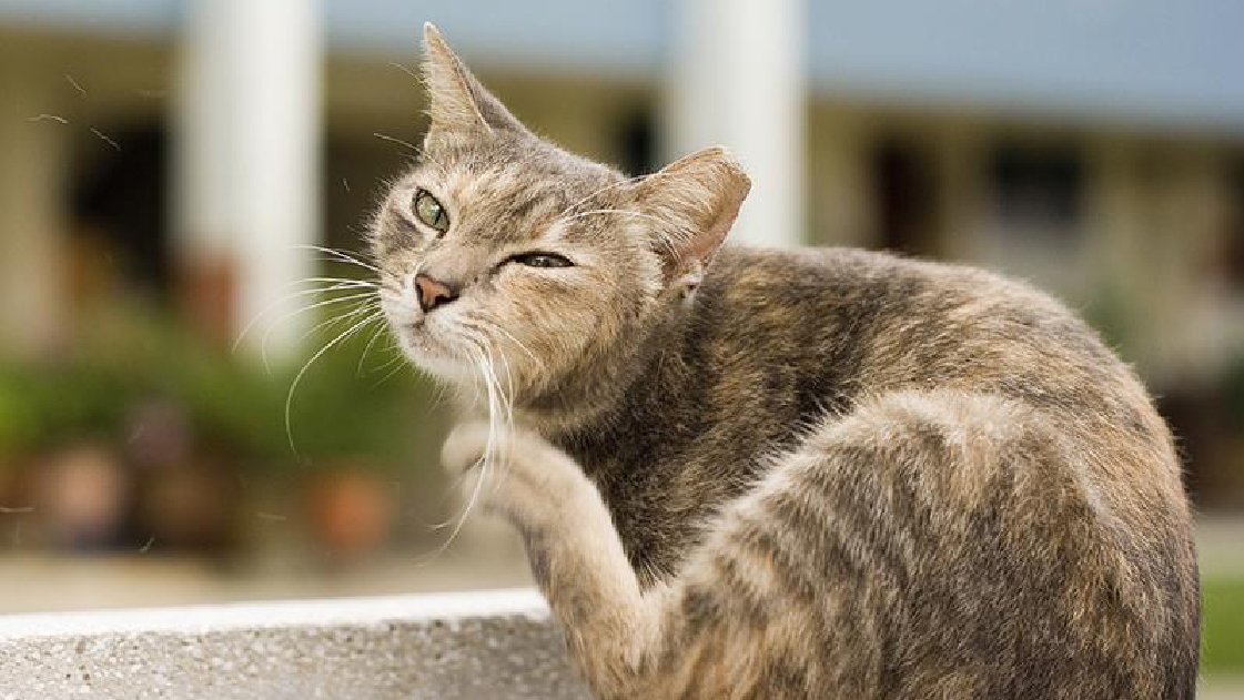Cat Flea Control Durban can control any level and severy infestation in any event.