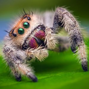 Spider Control Durban can deal with any level of Spider Infestation in Durban or Kwazulu-natal.