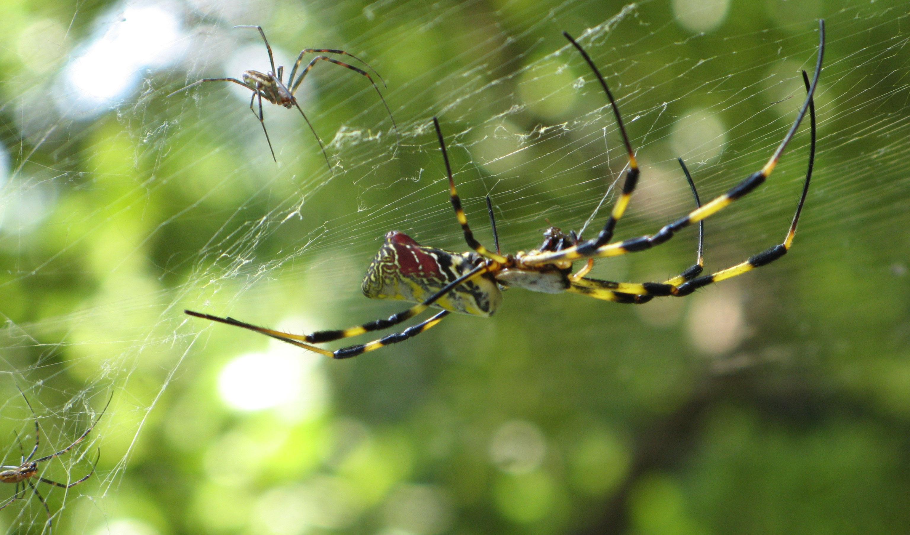 Let Spider Control Durban eradicate you Spider Infestation effortlessly.